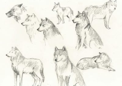 Website Sketchbook Wolves 1